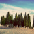 cypress trees on the field in tuscany italy at sunset vintage stock photo © photocreo