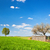 countryside landscape during spring with solitary trees and fence stock photo © photocreo