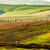 toscana · campos · outono · paisagem · Itália · colheita - foto stock © photocreo
