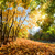 autumn fall landscape in forest stock photo © photocreo