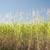 cukornád · aratás · trópusi · Queensland · Ausztrália · munka - stock fotó © photohome