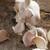 fresco · alho · superfície · comida - foto stock © photohome