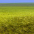 области · зерна · подробный · мнение · небе · продовольствие - Сток-фото © photosebia