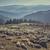 flock of sheep in sheepfold stock photo © photosebia