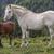 caballo · sol · sangre · verano · retrato · atrás - foto stock © photosebia