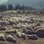 sheep resting in sheepfold stock photo © photosebia