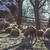 羊 · 雪 · 霧の · 風景 · 冬 - ストックフォト © photosebia