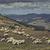Grazing flock of sheep stock photo © photosebia