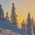 ель · деревья · зима · путь · землю · красивой - Сток-фото © photosebia