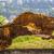 кабан · стейк · служивший · сельдерей · украшенный - Сток-фото © photosebia