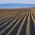 mezőgazdasági · mező · föld · föld · tavasz · kész - stock fotó © photosebia