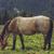 лошади · трава · зеленый · горные · луговой · лес - Сток-фото © photosebia