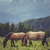 pair of grazing horses stock photo © photosebia