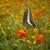 zseniális · pillangó · etetés · virágok · kert · virág - stock fotó © photosil