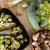 groenten · broccoli · prei · vis · citroen · dieet - stockfoto © photosil