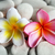 yellow and red frangipani on therapy stones stock photo © photosoup