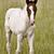 ló · Saskatchewan · Kanada · szeretet · anya · farm - stock fotó © pictureguy