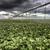 nubes · de · tormenta · saskatchewan · verde · planta - foto stock © pictureguy