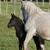 horses in pasture stock photo © pictureguy