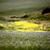 termény · völgy · Saskatchewan · Kanada · természet · tájkép - stock fotó © pictureguy