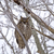 great horned owl in tree stock photo © pictureguy