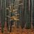 лес · туманный · дерево · древесины · свет - Сток-фото © pietus