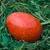 easter · egg · kırmızı · yeşil · saman · seçici · odak · sığ - stok fotoğraf © Pietus