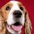 verspielt · Tennisball · Spiel · Hund · glücklich · grünen - stock foto © pietus