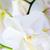 orkide · çiçek · dal · çiçekler · doğa · arka · plan - stok fotoğraf © Pietus