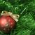 Noel · kırmızı · yeşil · top - stok fotoğraf © Pietus