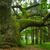 meşe · ahşap · gökyüzü · orman · doğa - stok fotoğraf © pietus