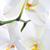 orkide · tazelik · çiçek · dal · seçici · odak · soyut - stok fotoğraf © Pietus