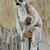 Afrika · hát · száj · szőr · szafari · közelkép - stock fotó © pilgrimego