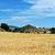 buğday · alanları · dağlar · gün · batımı · İspanya - stok fotoğraf © Pilgrimego