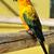 tropische · Geel · papegaai · groene · vleugels · vergadering - stockfoto © pilgrimego
