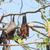battant · Fox · bat · suspendu · arbre · forêt - photo stock © pinkblue
