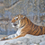 tijger · rock · steen · behang - stockfoto © pinkblue