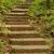 erdő · ösvény · lépcsősor · kopott · fa · út - stock fotó © pinkblue
