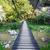 avventura · legno · corda · giungla · ponte · sospeso · foresta · pluviale - foto d'archivio © pixachi
