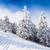 pin · forêt · couvert · neige · saison · d'hiver · arbre - photo stock © pixachi