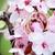 alliances · rose · cerise · fleurs · mariage - photo stock © pixachi