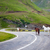 fehér · barna · vad · lovak · mező · kettő - stock fotó © pixachi