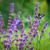 káprázatos · pillangó · fotó · gyönyörű · színes · szárnyak - stock fotó © pixachi
