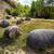 vie · croissant · pierres · roma · Roumanie · 2012 - photo stock © pixachi