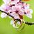alliances · rose · pomme · fleur · mariage - photo stock © pixachi
