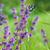 zonnebloem · vlinder · tijger · bloem · natuur · licht - stockfoto © pixachi