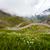 fleurs · sauvages · montagne · Roumanie · fleurs · forêt · fond - photo stock © pixachi
