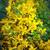 verde · amarelo · flores · verão · medicina · inseto - foto stock © pixachi
