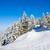 pine · bomen · gedekt · sneeuw · winterseizoen · boom - stockfoto © pixachi