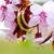 alliances · rose · pomme · fleurs · fleur - photo stock © pixachi